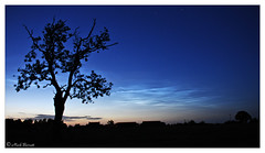 Ash tree Silhouette against Noctilcent Cloud June 21 2020