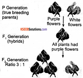 KSEEB Class 10 Science Important Questions Chapter 9 Heredity and Evolution img2