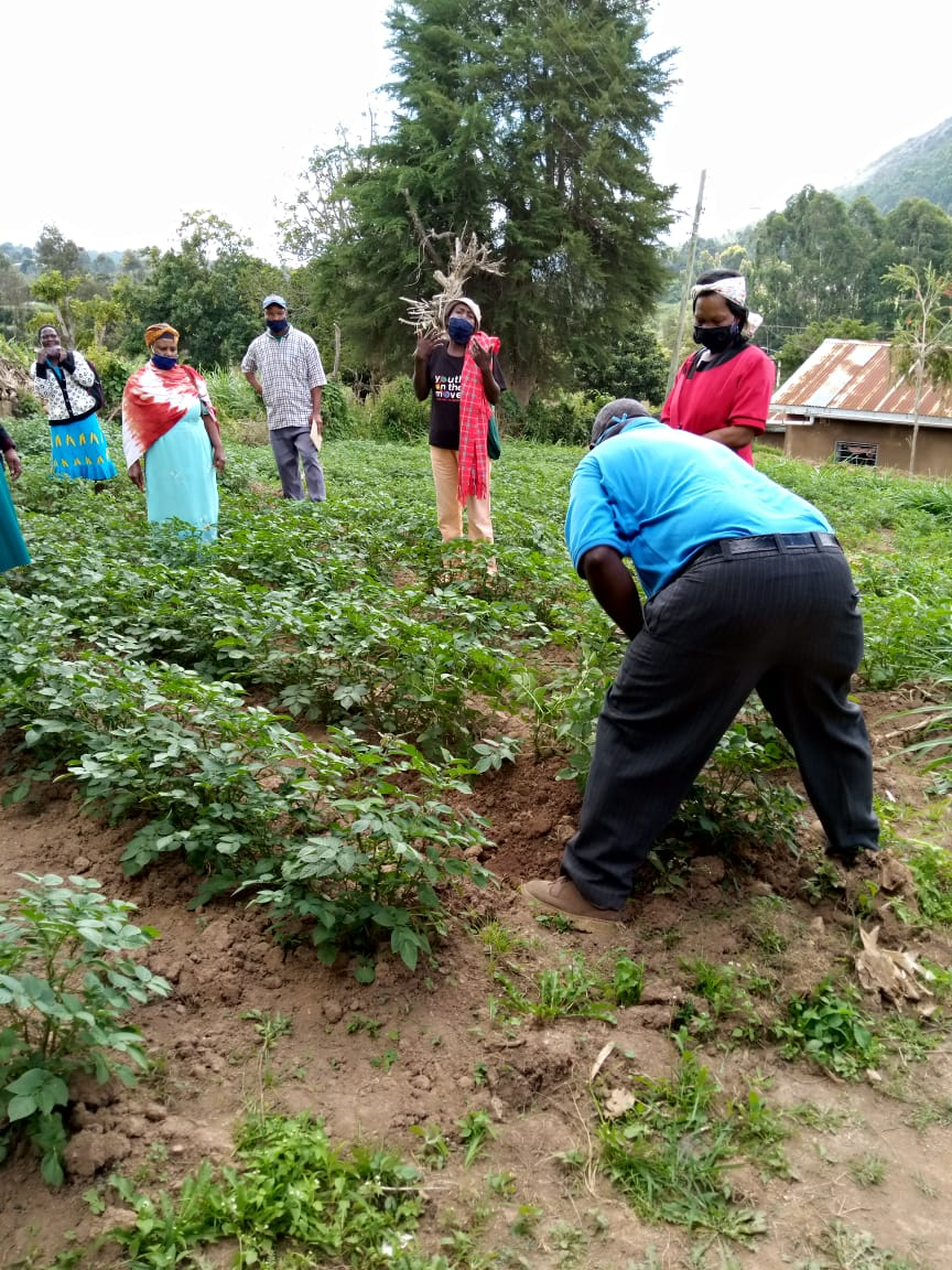 Demonstrating how to do proper second hilling to host farmers in Taita Taveta