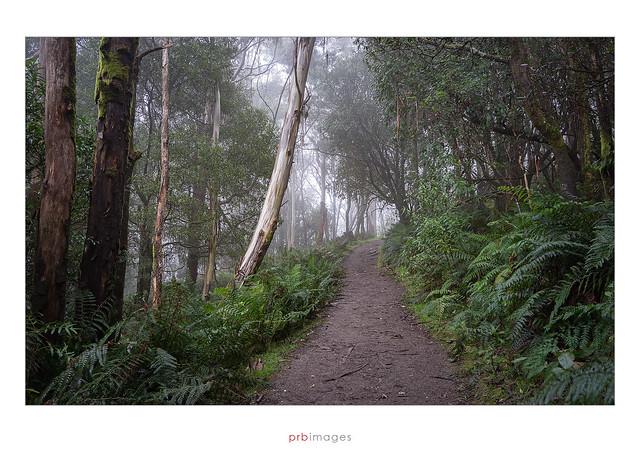 Camel's Hump trail, Mount Macedon