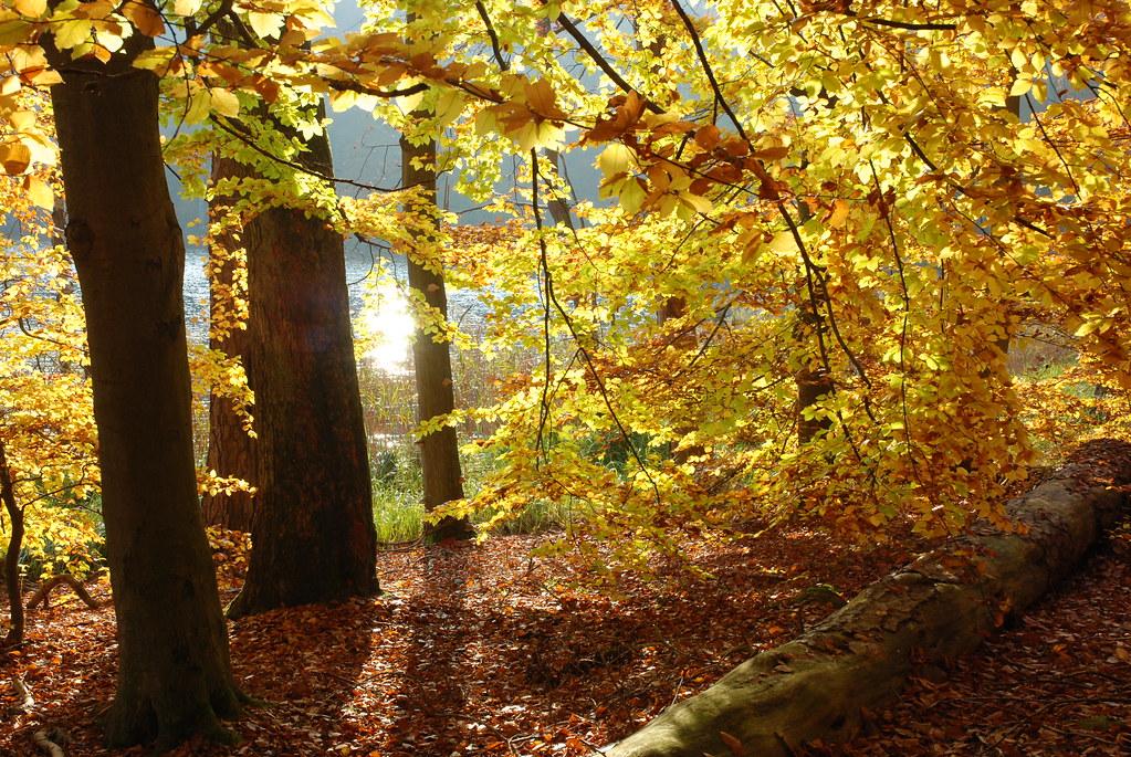 Schweingartensee im UNESCO-Welterbe Büchenwälder / Bildautor: Ulrich Meßner