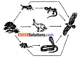 KSEEB Class 10 Science Important Questions Chapter 15 Our Environment 11