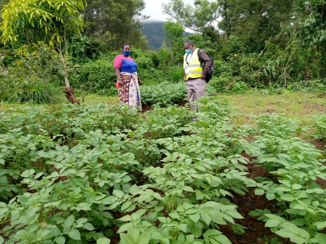 Ward agricultural officer host potato farmer in Bura ward, Bungoma county, Kenya