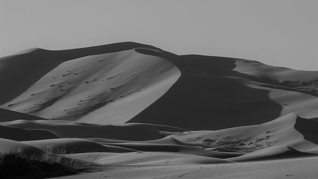 Sahara on B&W_Explore 6/24/2020