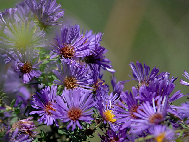 'Purple elegance 💜...