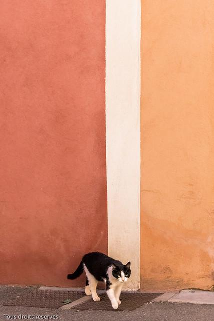 Chat et couleurs du Luberon