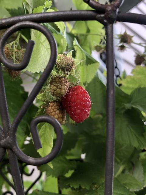 First raspberry