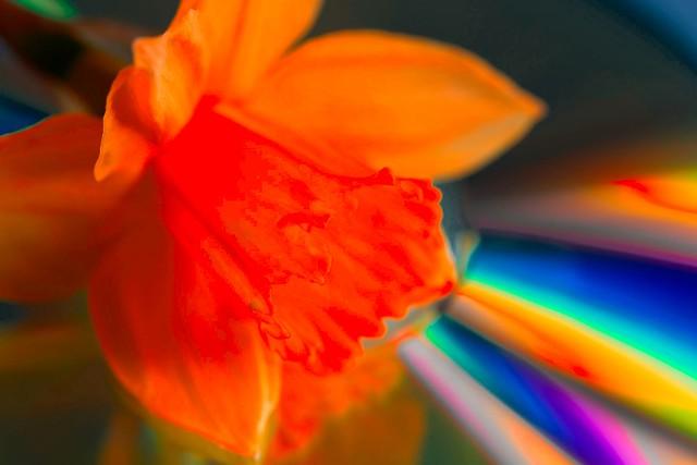 Flower in Digital Light