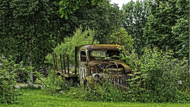 Northwest Lawn Art