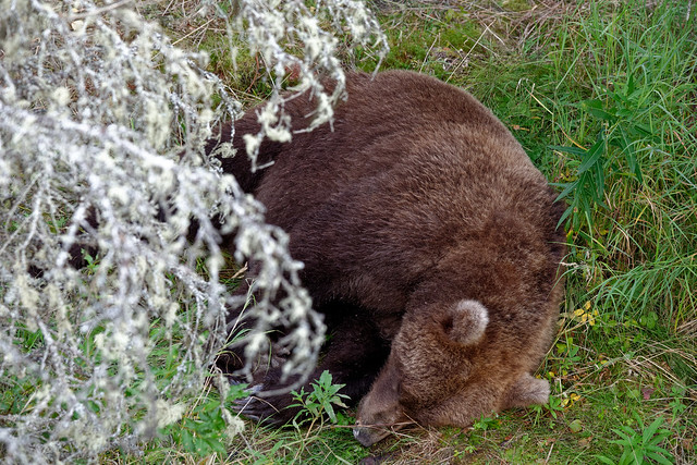 And Then It Was the End of the Day and Time for a Nappy-Nap (Katmai National Park & Preserve)
