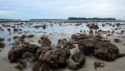 Living reefs of Terumbu Bemban, Jun 2020