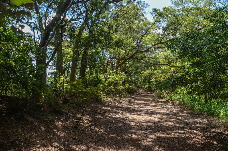 鯉魚潭(南片山)、枕頭山步道