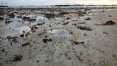 Seagrasses on Terumbu Bemban, June 2020