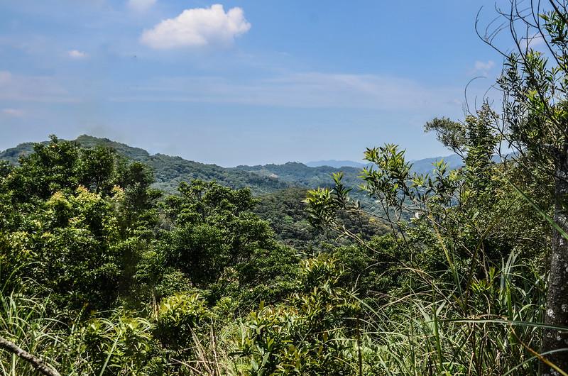 楓樹龍(魚藤坪山)山頂展望