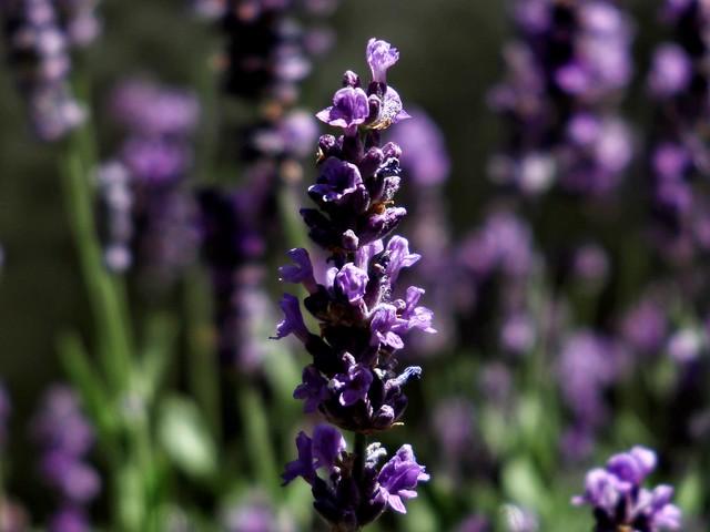 Degrees (Algo púrpura)