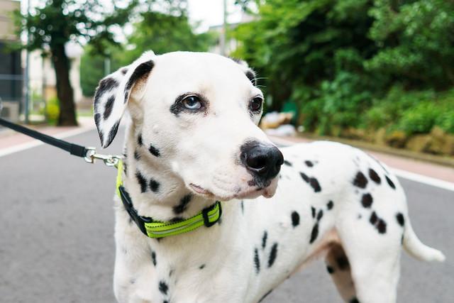 Dog near Yokohama Sankeien Garden : 横浜三渓園近くで見かけた犬