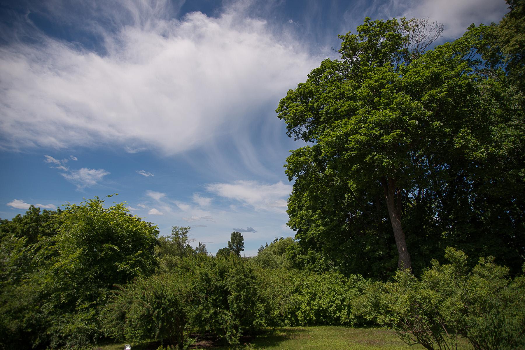 Тарханское небо. Фотозарисовки тарханских окрестностей А. Семенова. 25 июня 2020 года. Фото 5
