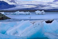 杰古沙龍冰河湖 Jökulsárlón glacier lagoon, Iceland