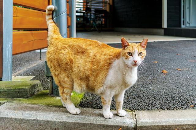 Cat near Yokohama Sankeien Garden : 横浜三渓園近くで見かけた猫