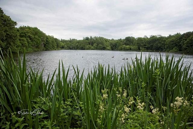Z50_0788 - Rowley Lake