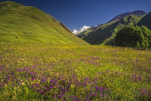Flower meadows (in Explore 26-06-2020)