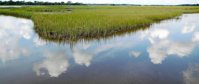 Stono River marsh