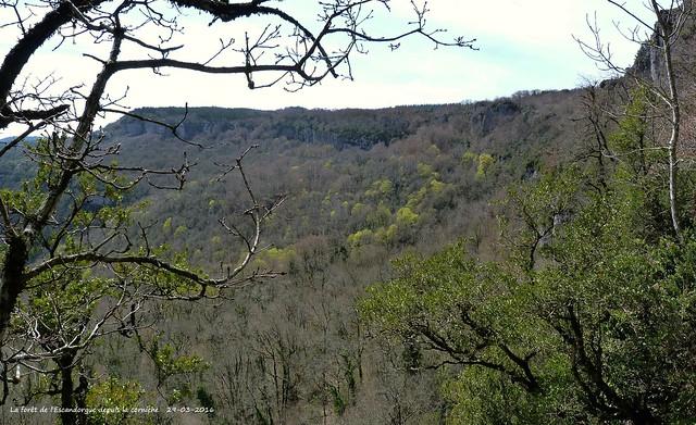 La forêt de l'Escandorgue.....