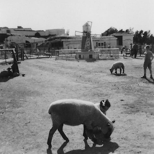 Sandown Zoo, Isle of Wight, 1950s