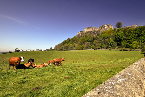 blue flowersplants green hill hoy landscape scotland spring stirling tree uk wall britain castle cattlef cows europe grass sky unitedkingdom