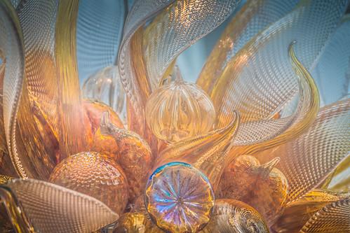 Seashells and sea anenomes at the seashore