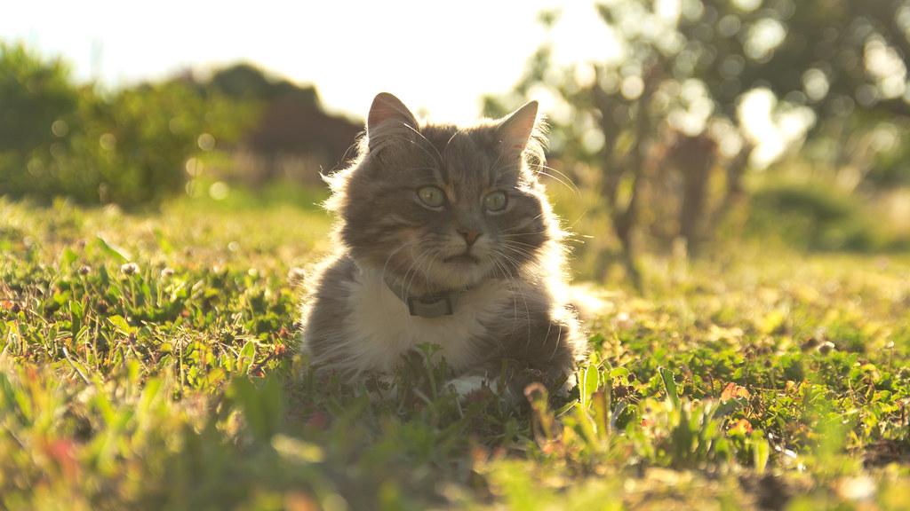 Backlight Cat 逆光の猫