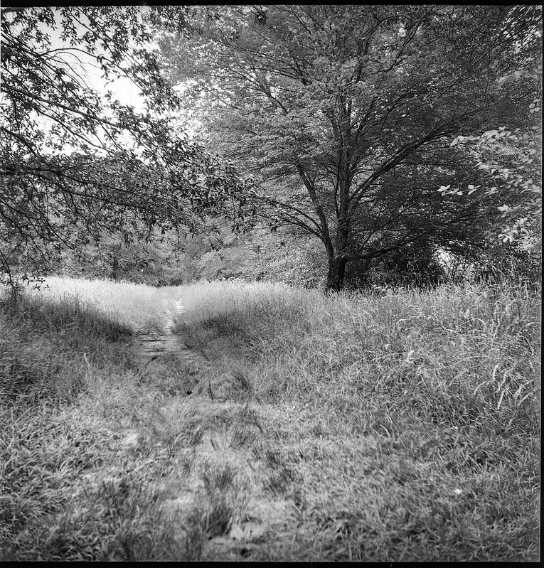 dirt pathway, trees, meadow, Biltmore Estate, Asheville, NC, Ricohflex Dia M, Kodak Tri-X 400, Moersch Eco film developer, 6.21.20