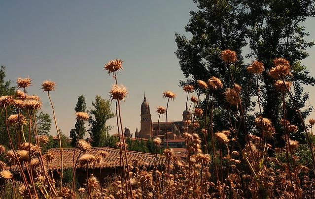 Paseando Salamanca.