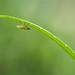 Teeny tiny bug...