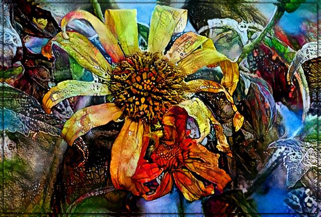 Just a sunflower