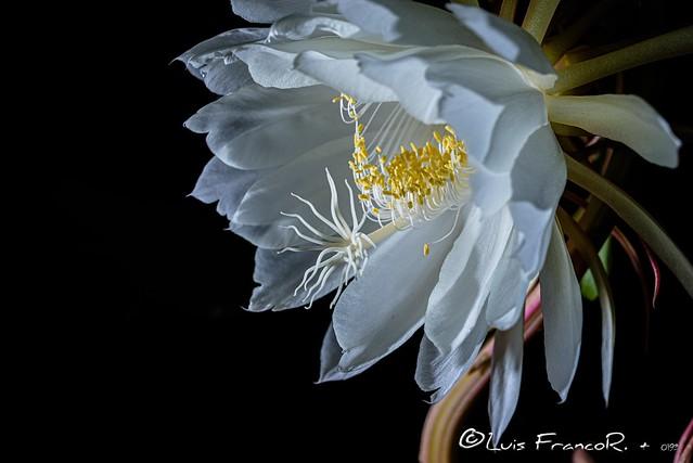 Fiesta dentro de  la flor  - Party inside the flower