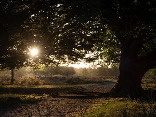 westerheide 2020 hilversum heath earlymorning dawn trees sunrise
