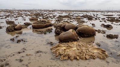 Living reefs of Terumbu Pempang Tengah, Jun 2020