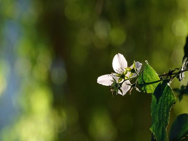 Das wahre Glück im Leben sind die kleinen Sonnenstrahlen, die jeden Tag auf unseren Weg fallen💕