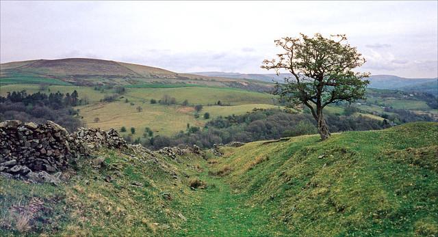 sweet hill