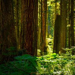 Morning Forest Scene