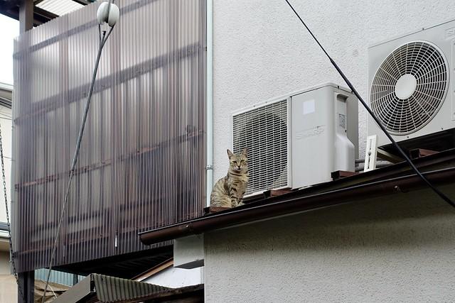 Today's Cat@2020ー06ー26