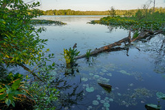 Bass Lake-06839