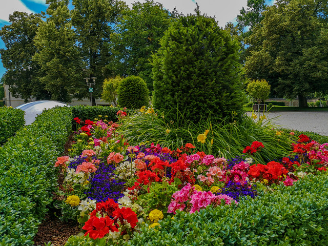 Summer is here with the colorful flowers.
