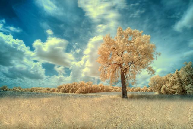 Golden Pasture (IR)