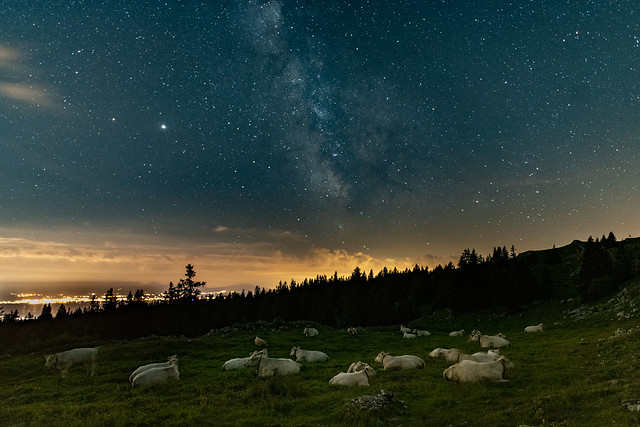 The Milky Way and the white cows