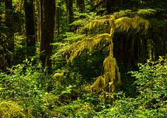 Moss Draped Tree
