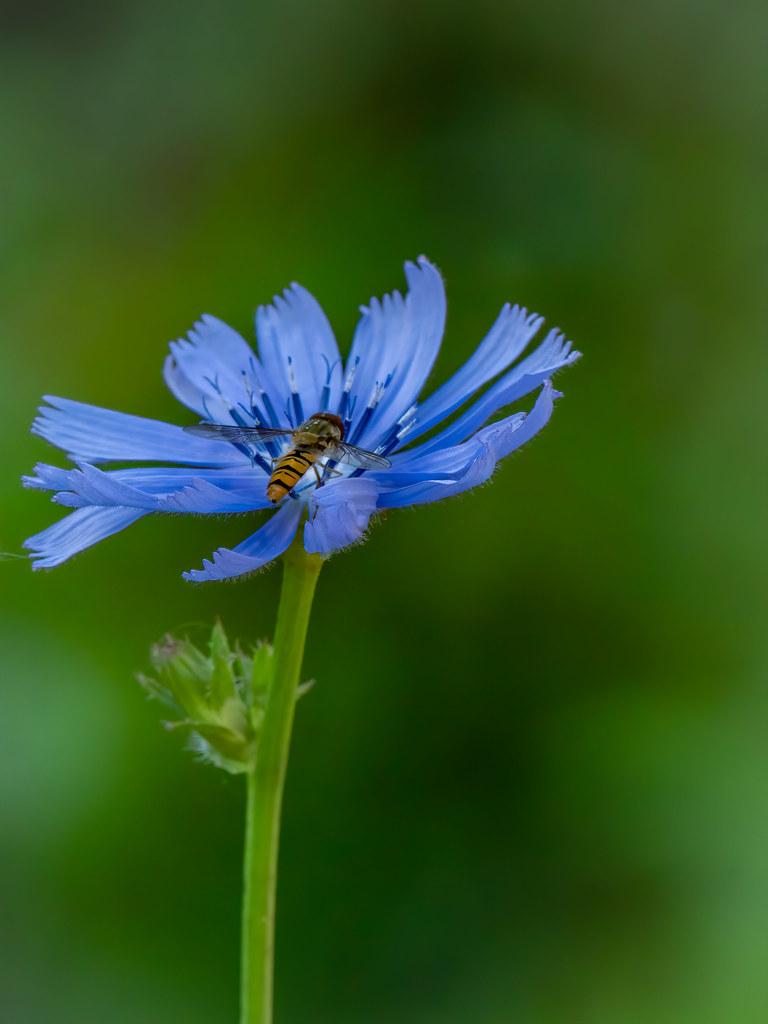 Atterrissage dans le bleu... 50047567628_bfd3039a81_b