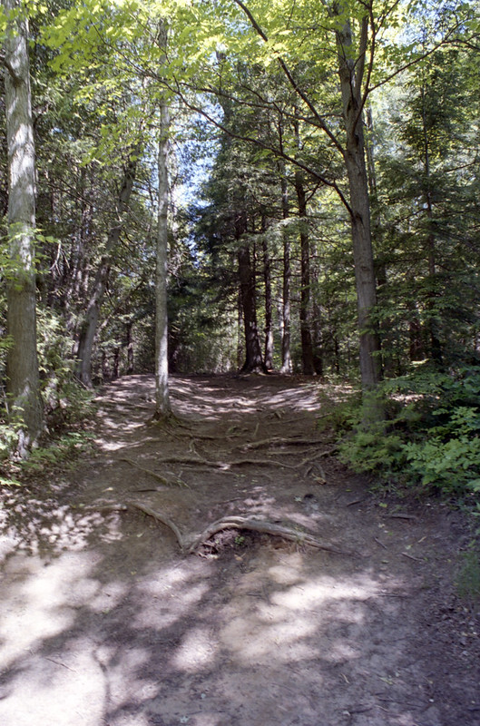 The Bruce Trail Heading Up