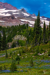Mount Rainier Wildflowers & Snowfields